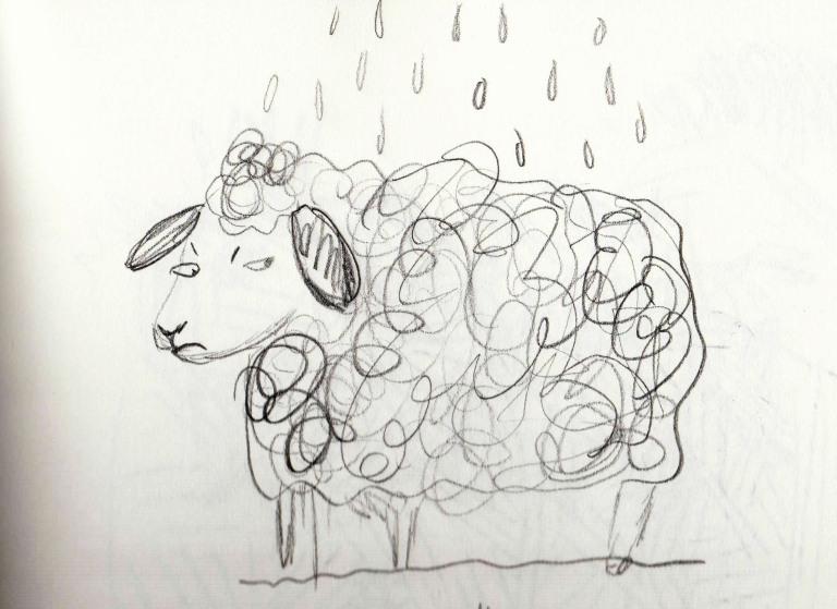 sheep rain